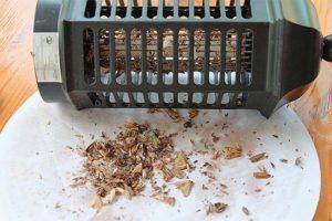 Ловля насекомых и грызунов в доме