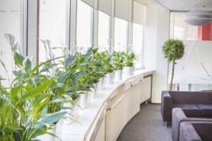 Озеленение офисов — самый бюджетный и быстрый способ оформления интерьера