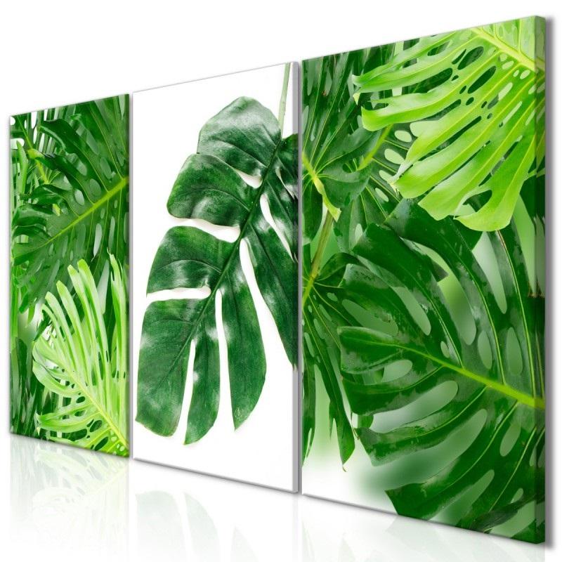 обои фото листья