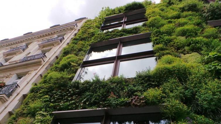 вертикальные сады преимущества