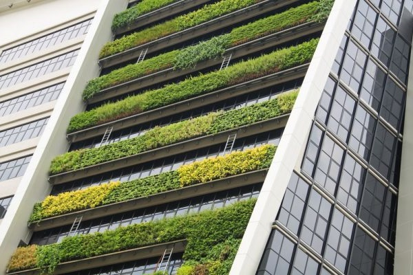 экостены вертикальный сад