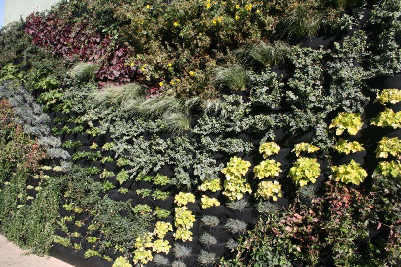вертикальный сад на стену